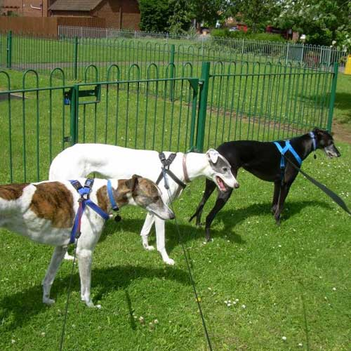 Biscuit, Angel and Flossie