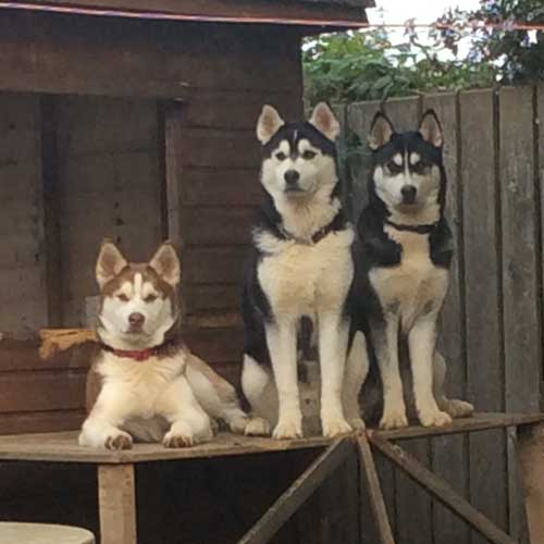 Novac, Koda, and Rafa