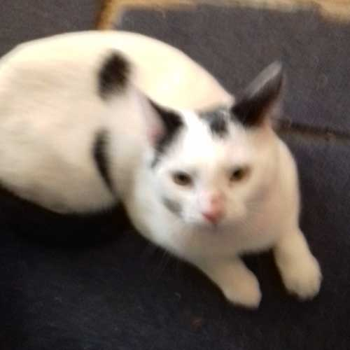 PETtrac™ Official   UK Pet MicroChip Database   24hr