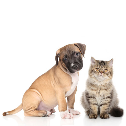 The PETtrac Database - Working with dog & cat breeders